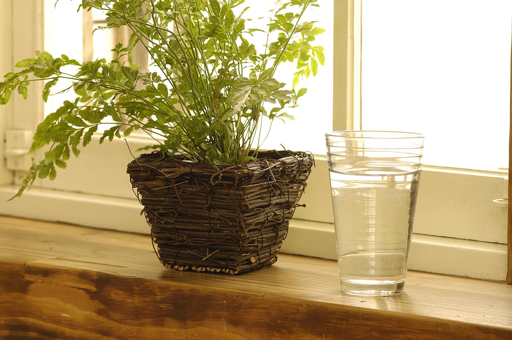 the right humidity level for your houseplants. Black Bedroom Furniture Sets. Home Design Ideas