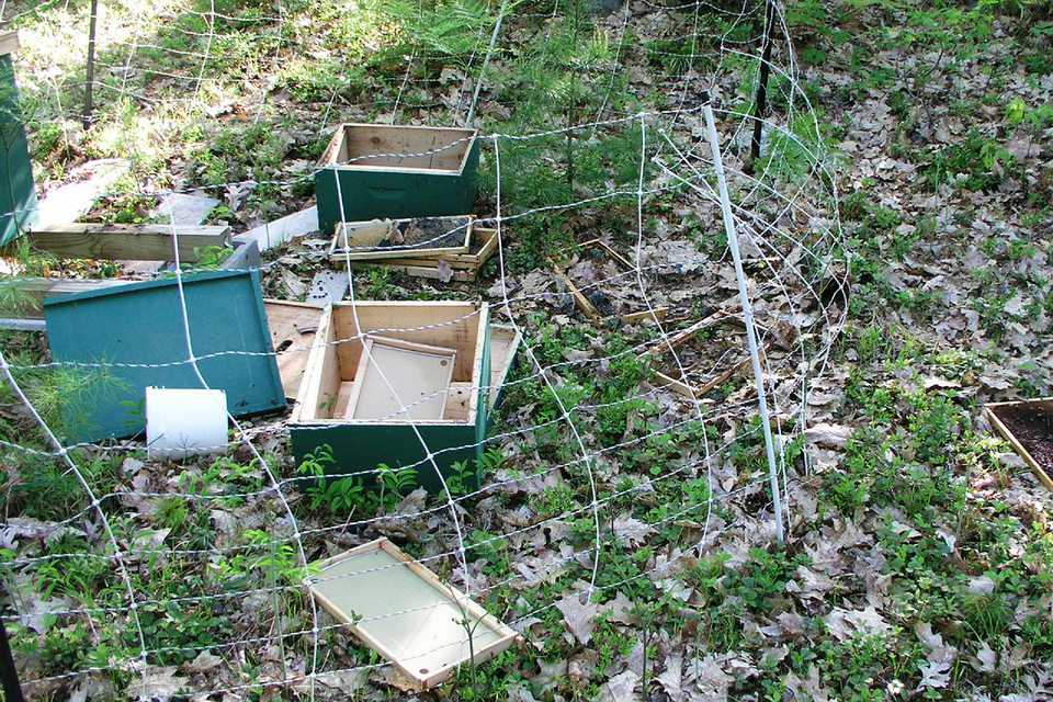 Toppled and destroyed box hives