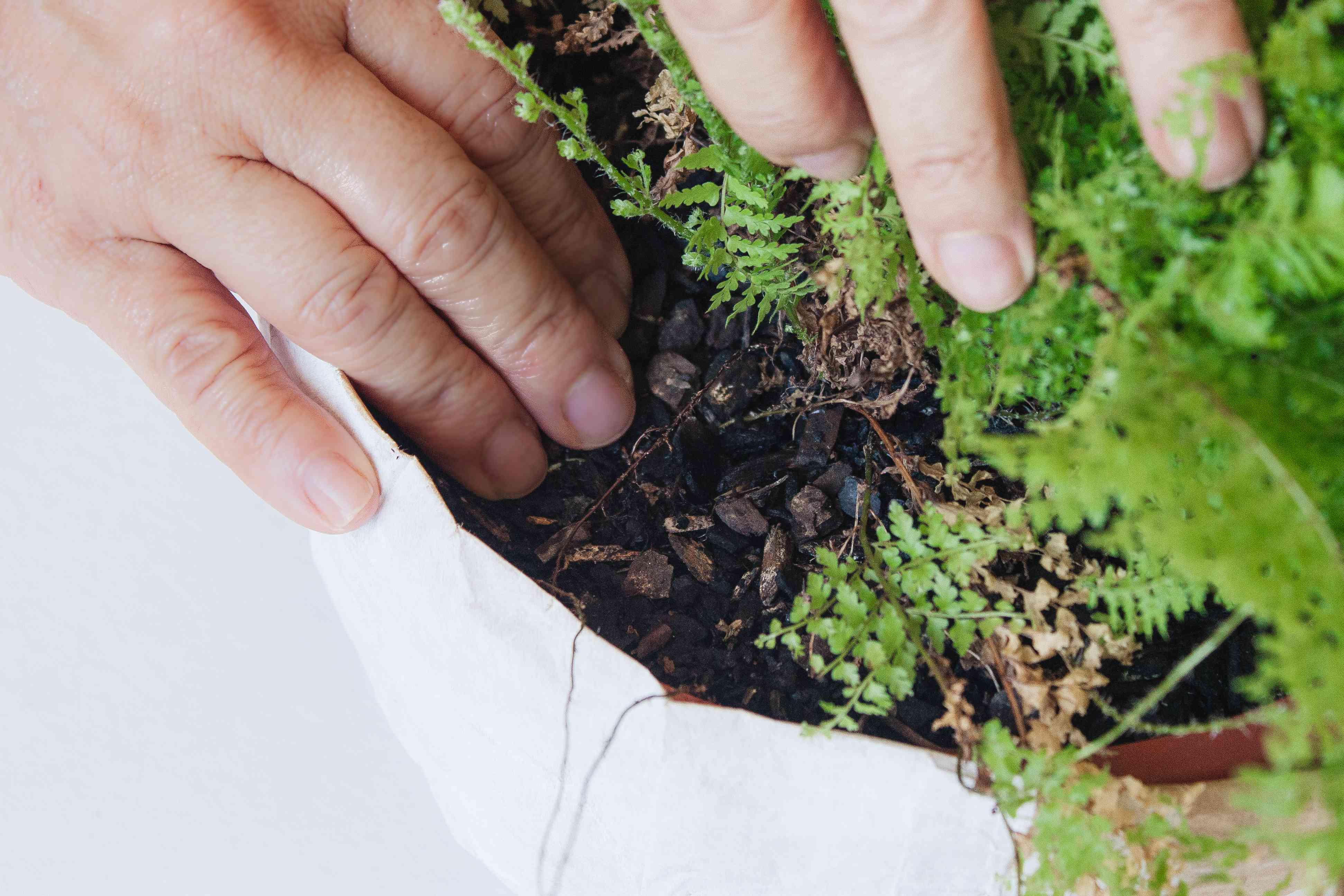 person feeling soil for dampness