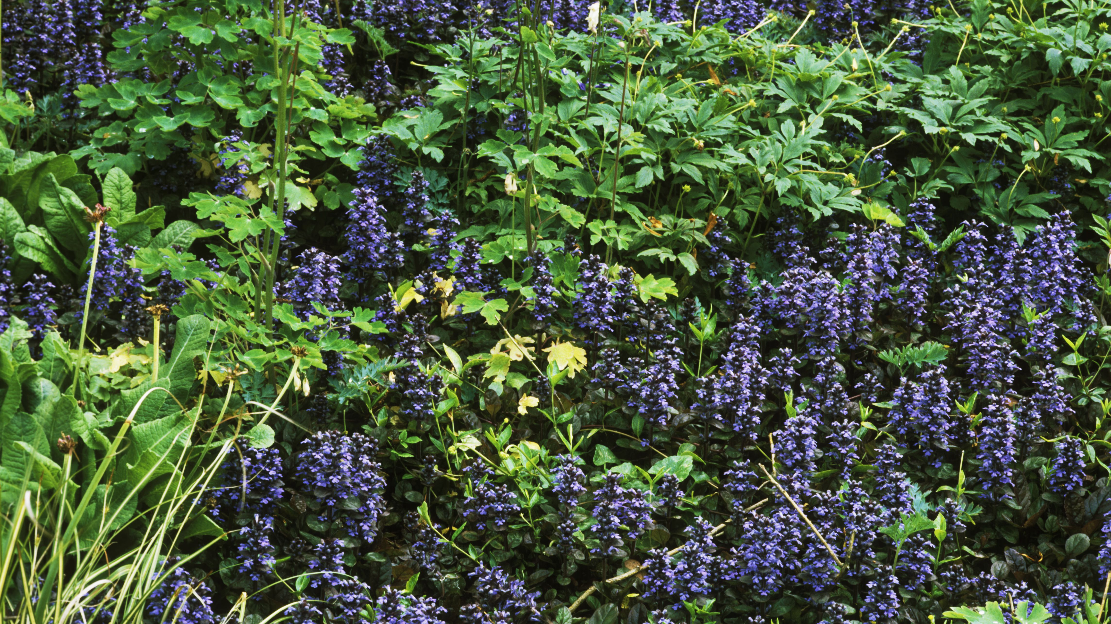 Ground Covers Learn What They Are And
