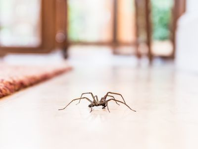The 7 Most Common Types of House Spiders. Spider Control