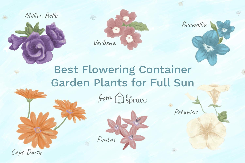 mejores plantas en macetas con flores
