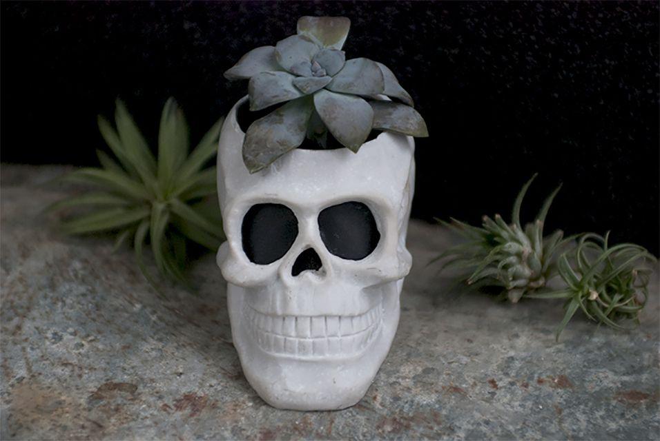 A skull planter