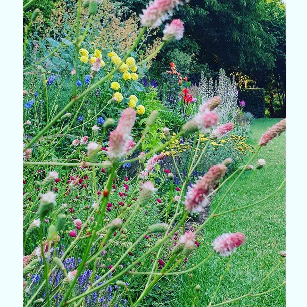 Sprays of perennials in a cottage garden bed