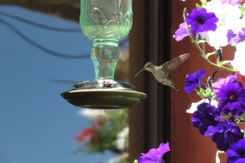 Hummingbird flying near a feeder with purple flowers nearby.