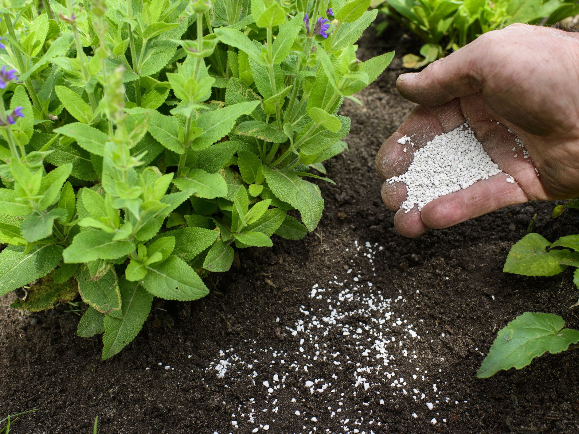 How to Fertilize and Water-In With Rain
