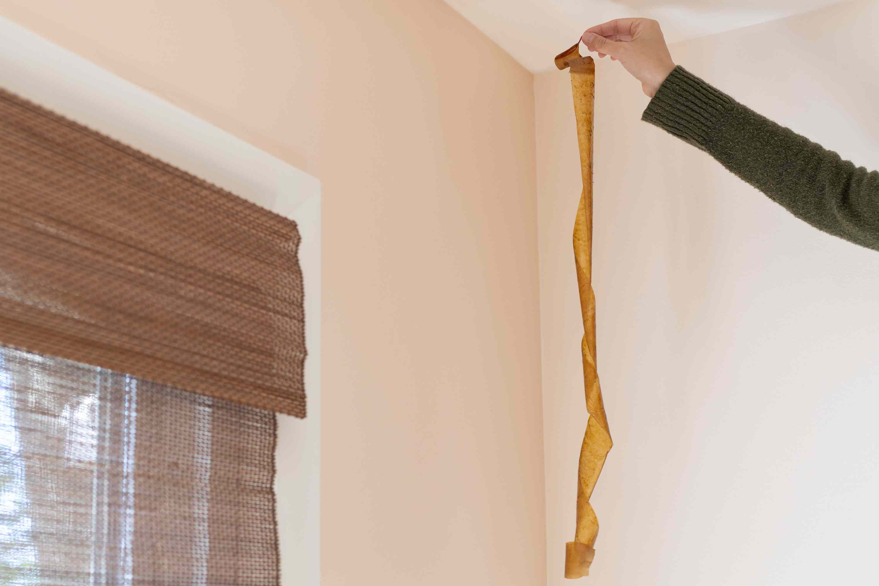 Flypaper being hung from ceiling to trap cluster flies near window