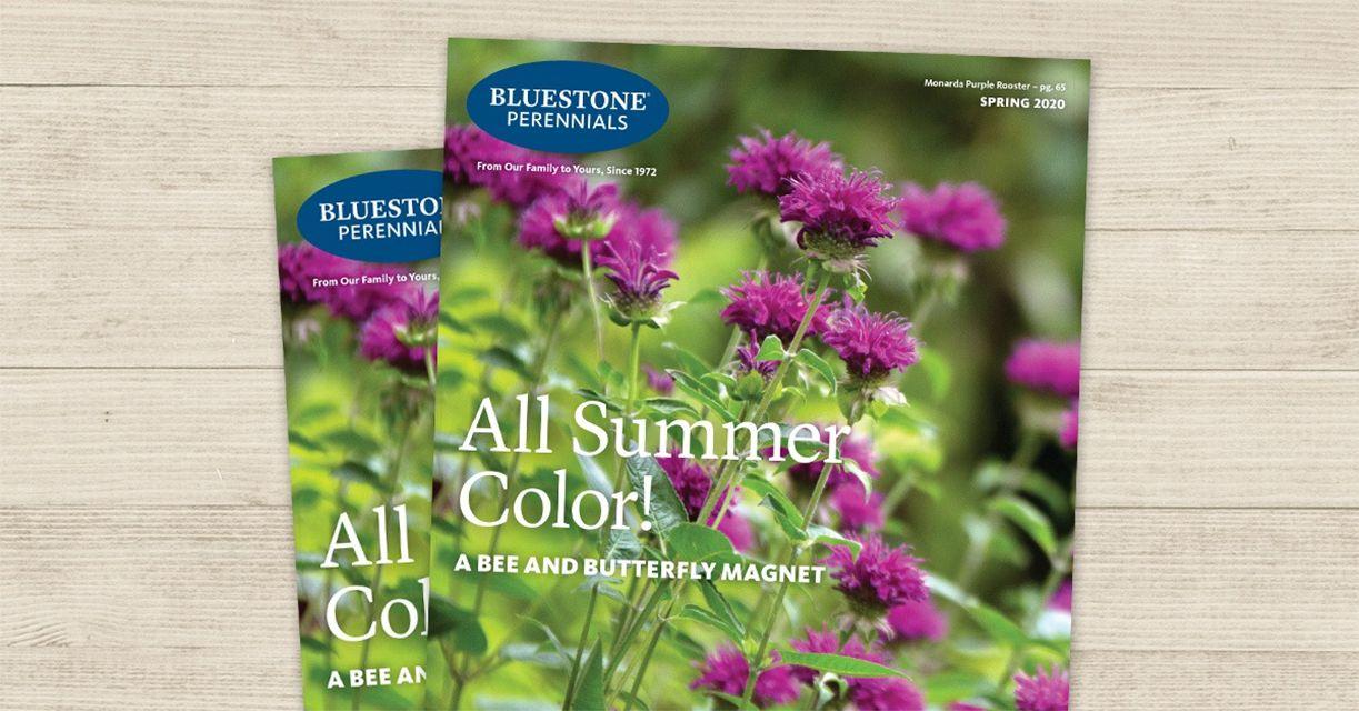 La portada del catálogo de Perennes Bluestone de primavera 2020