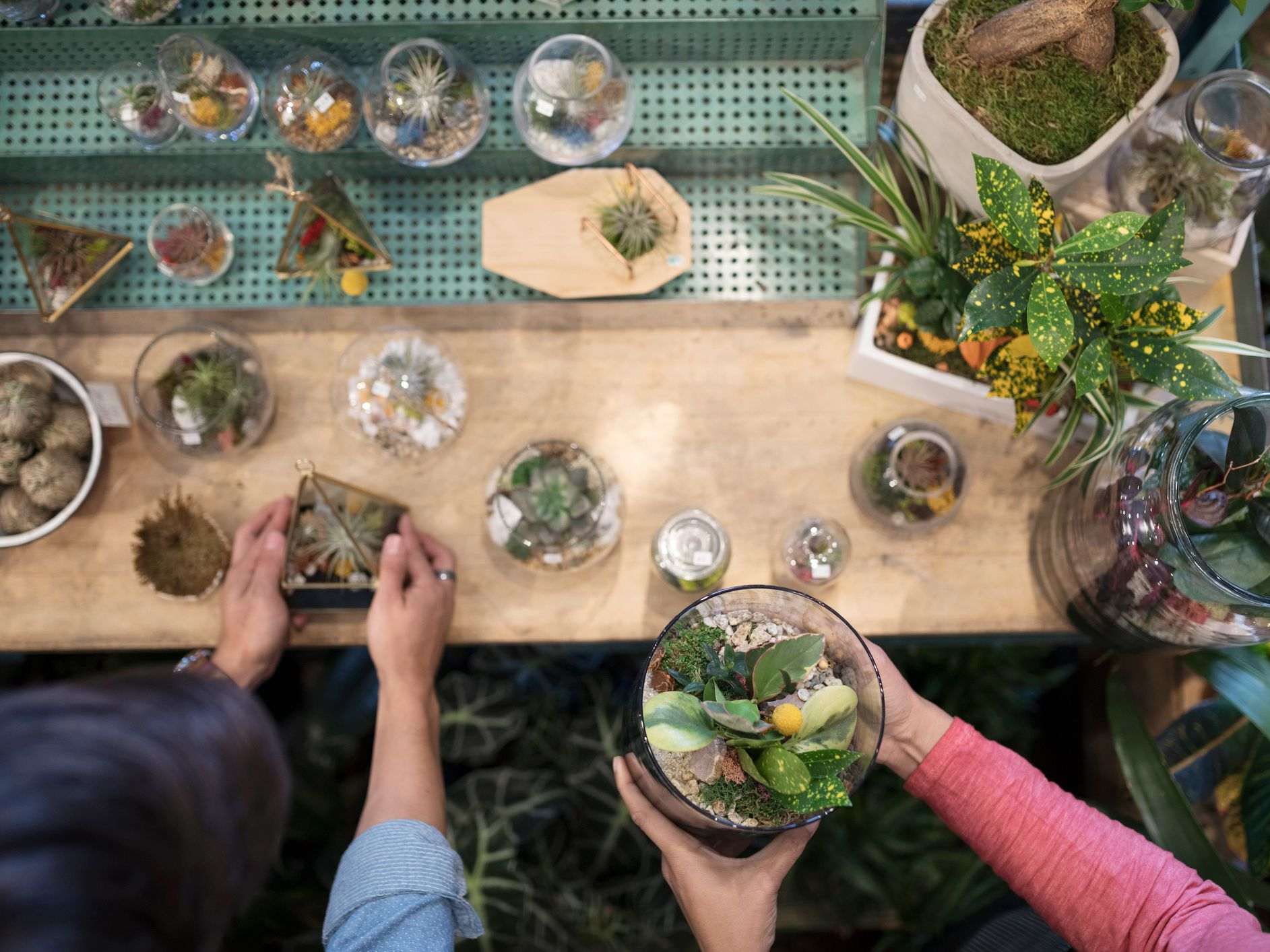 10 Types Of Low Care Plants That Grow Well In Terrariums