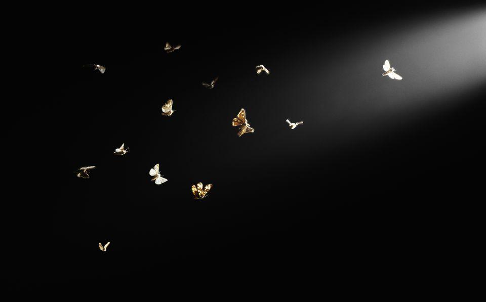 Polillas volando en el haz de luz, fondo negro