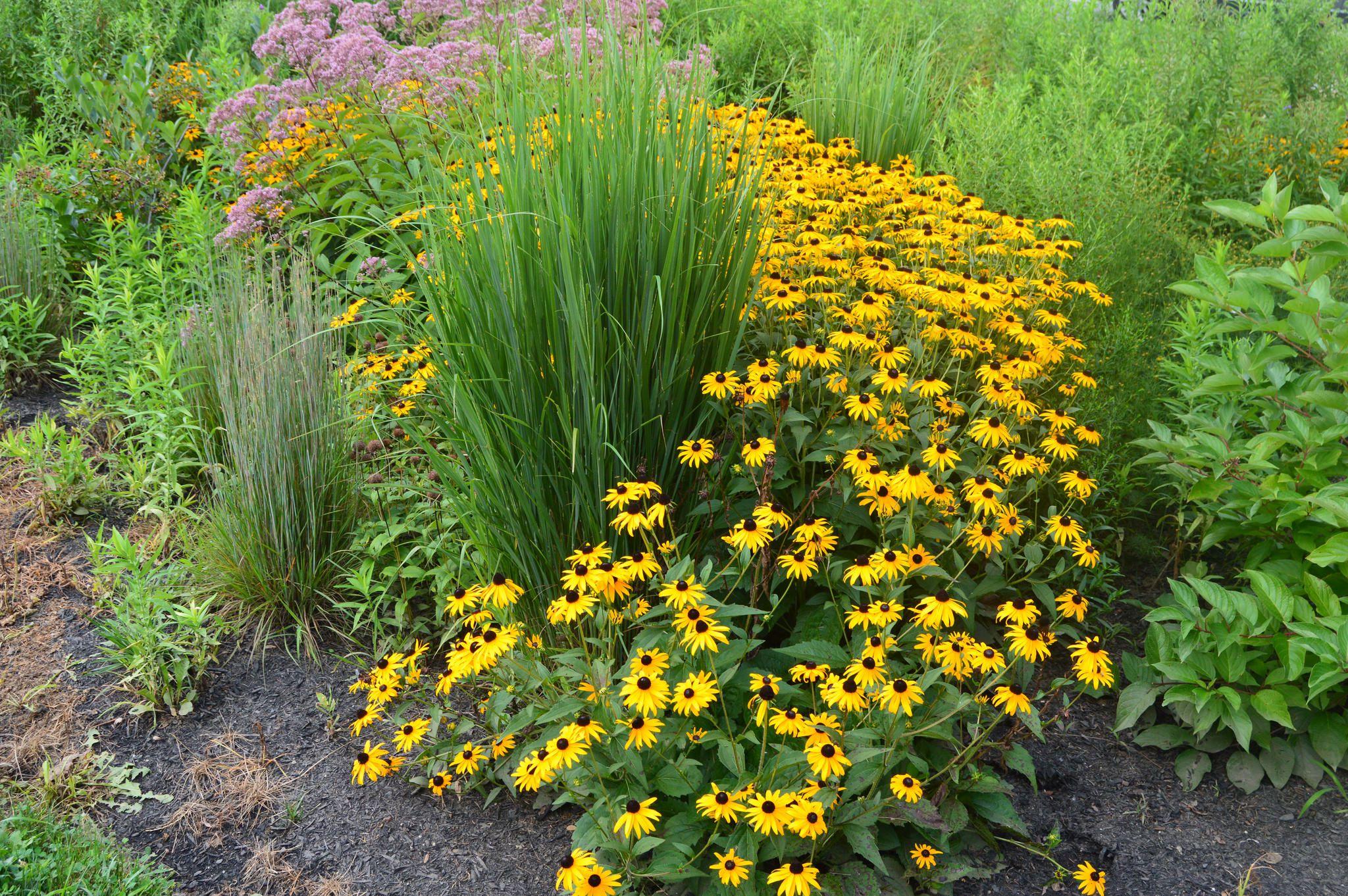 Design A Flowering Rain Garden