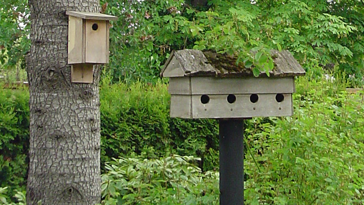 How To Hang A Birdhouse And Mounting A Nesting Box