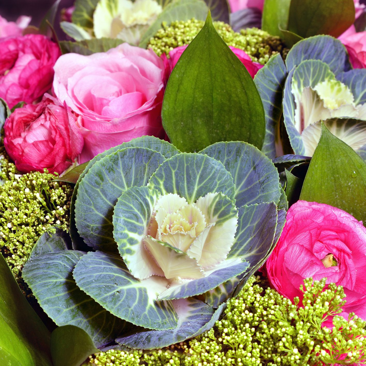 Top Ornamental Cabbage Varieties