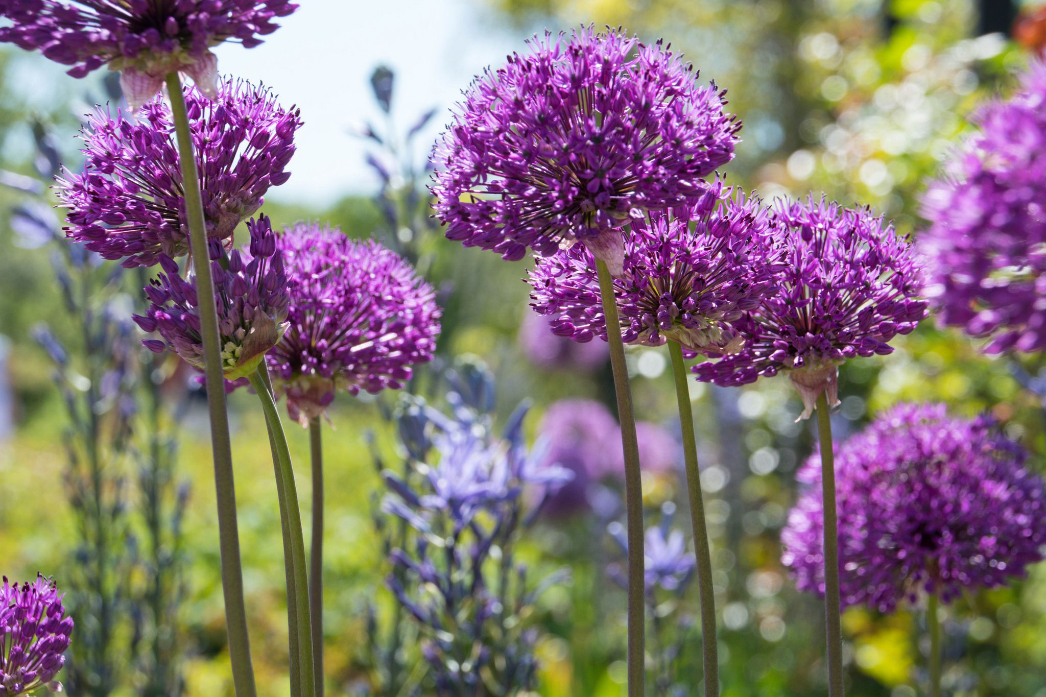 Spring Blooming Bulbs For Warmer Climates