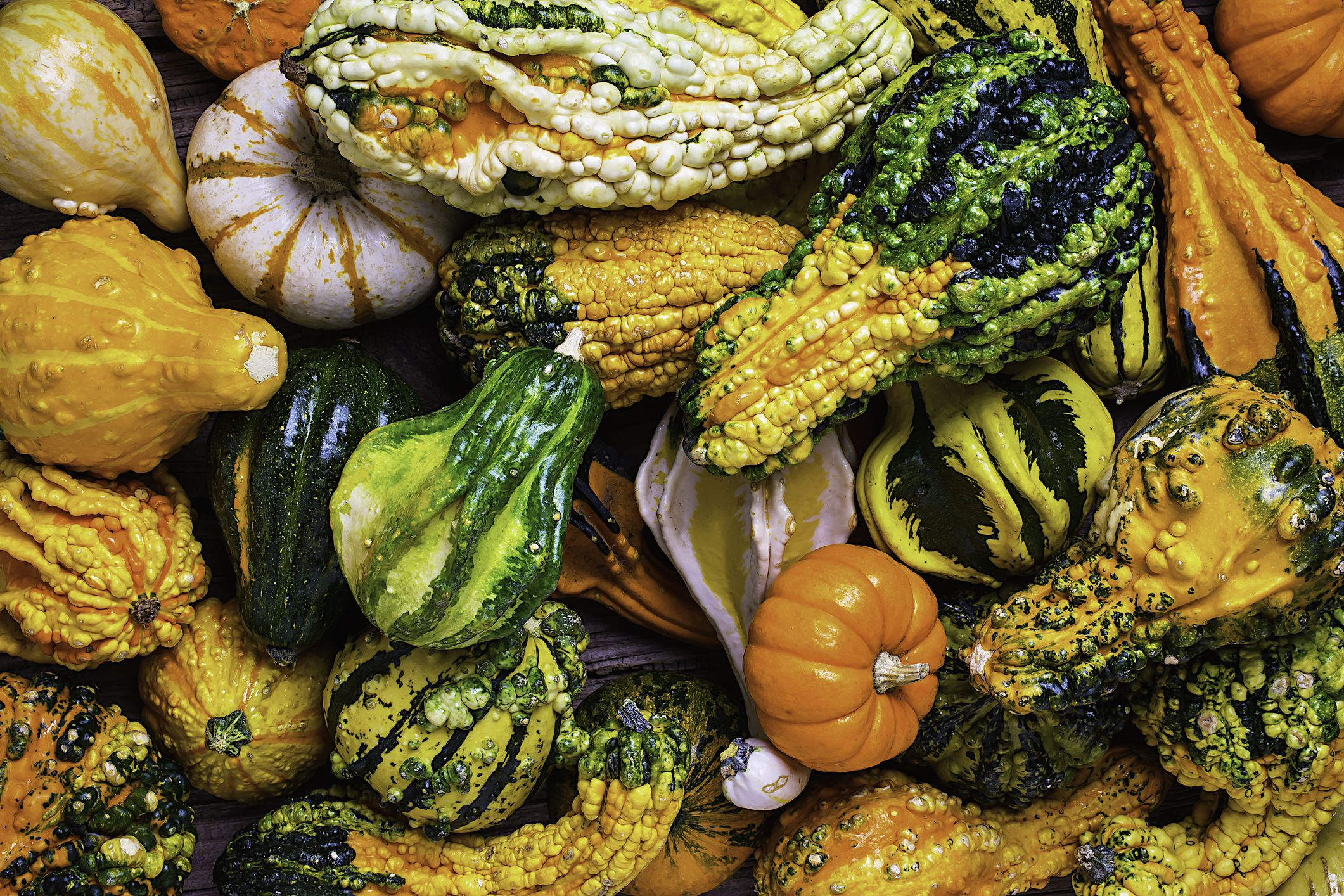 Growing A Variety Of Ornamental Gourds