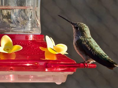 How To Get More Hummingbirds To Your Feeders