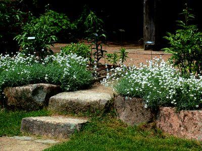 Perennial flowers that bloom all summer 10 perennials that thrive in full sun mightylinksfo