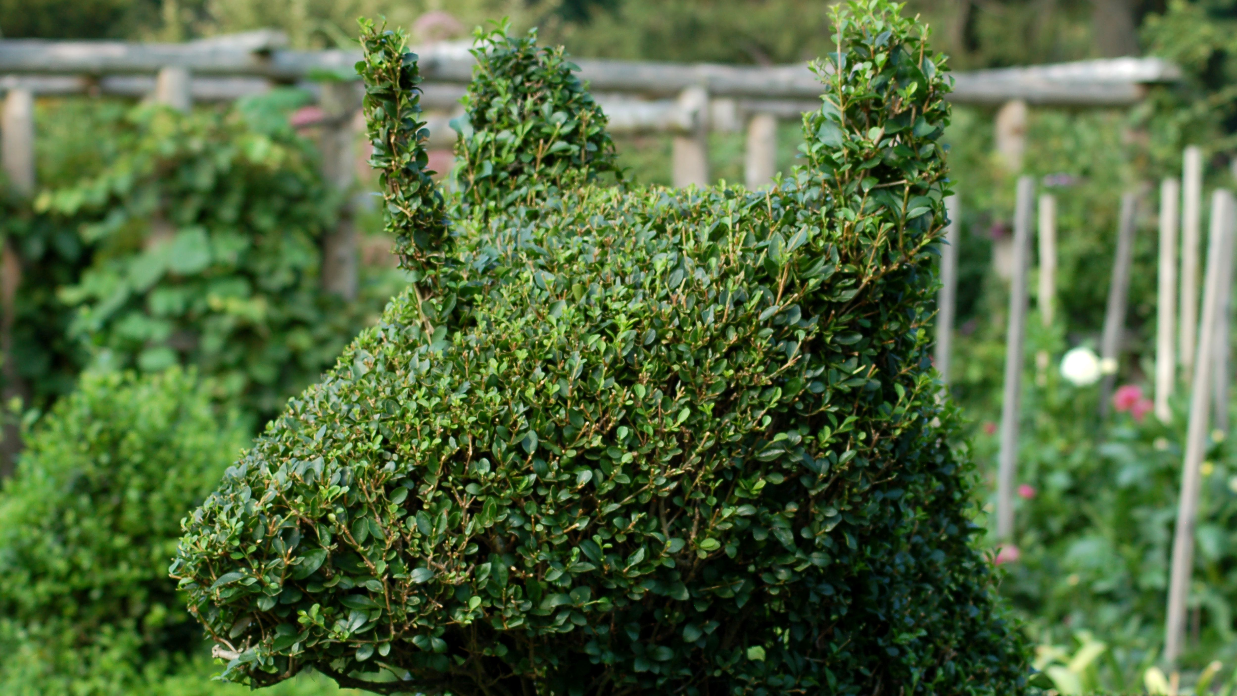 What Is A Shrub Topiary And How Do You Make One