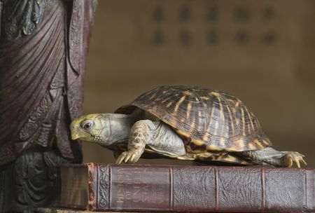 The Meaning of the Tortoise in Feng Shui