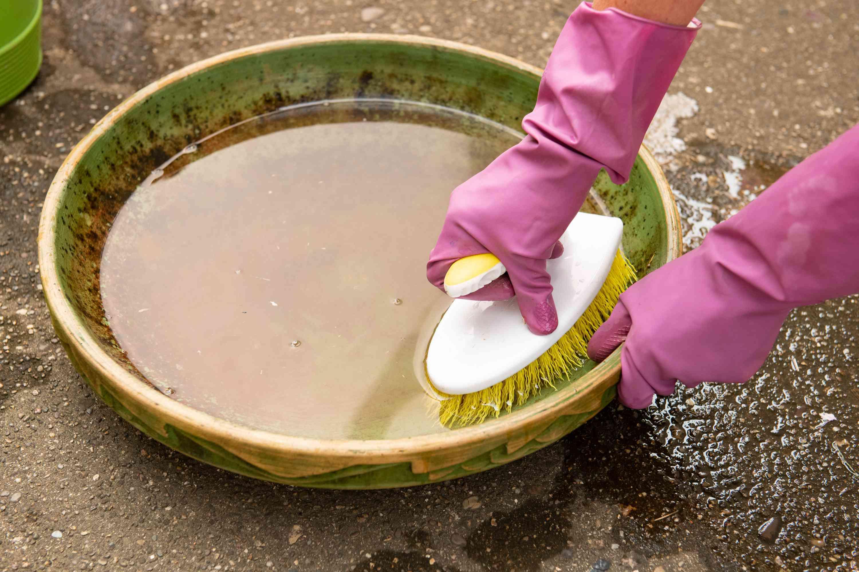 scrubbing the bird bath with a bleach solution