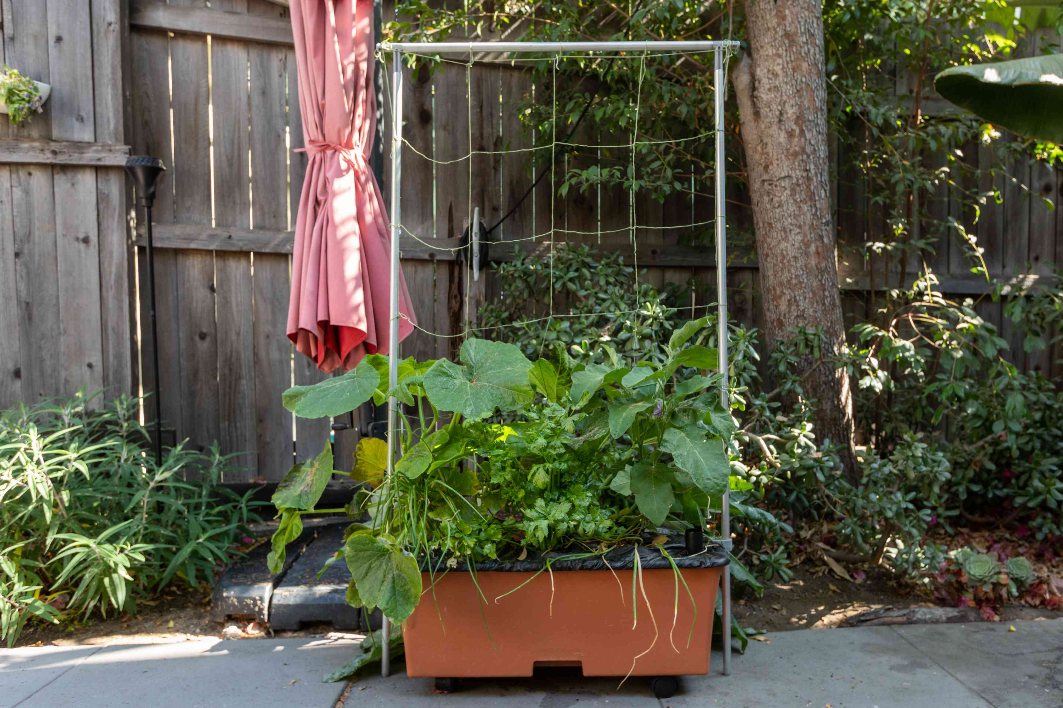 Earthbox growing container with large vegetable plants supported with string trellis in backyard