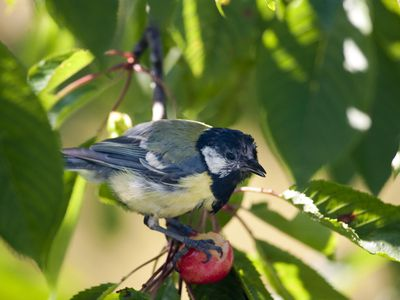 How to Deter Birds From Your Garden and Home