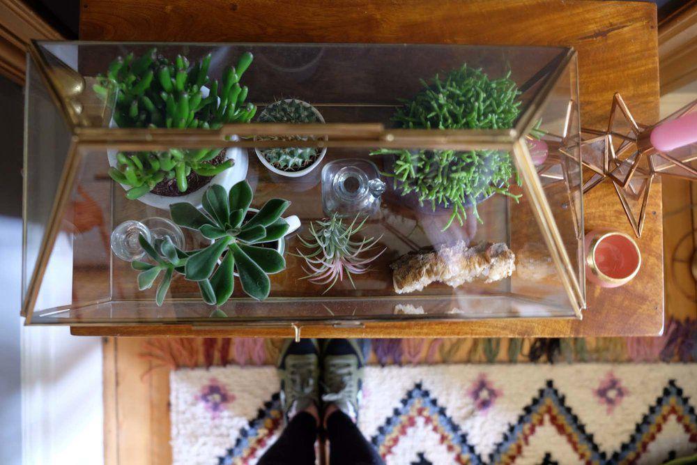 Large plant terrarium