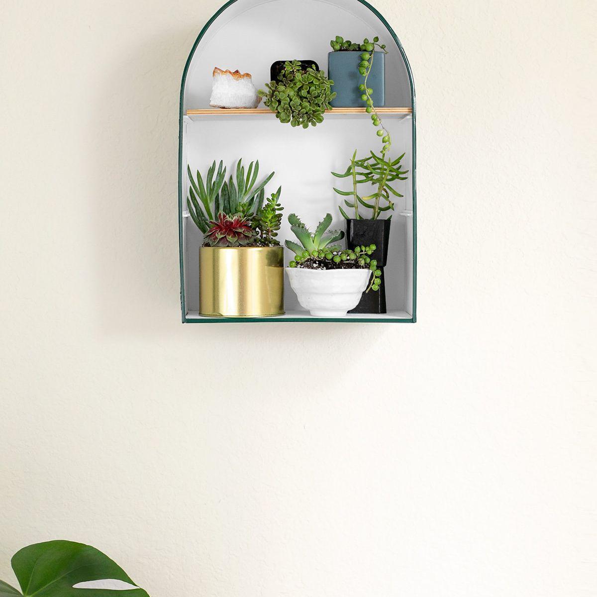 Cat Meschia plant shelf