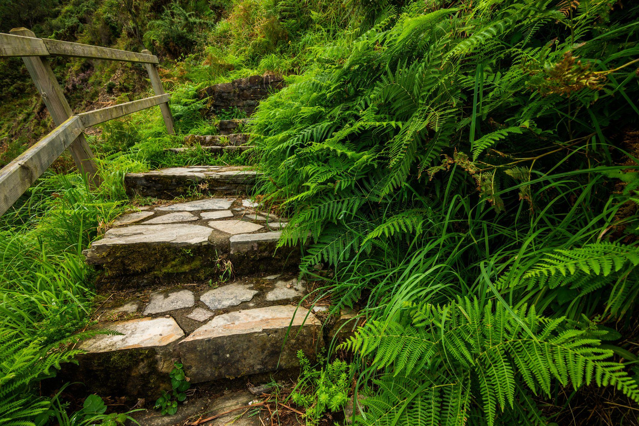 Staircase in green fern. Asturias, Spain