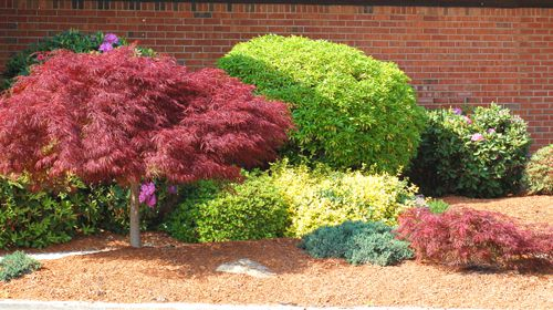 This photo shows and example of a colorful foundation bed. - Pictures Of Foundation Plantings: Ideas For Shrubbery