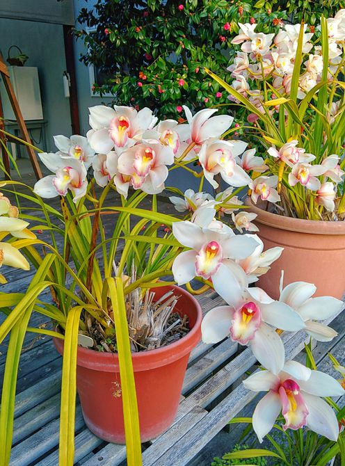 Orchid Container Garden