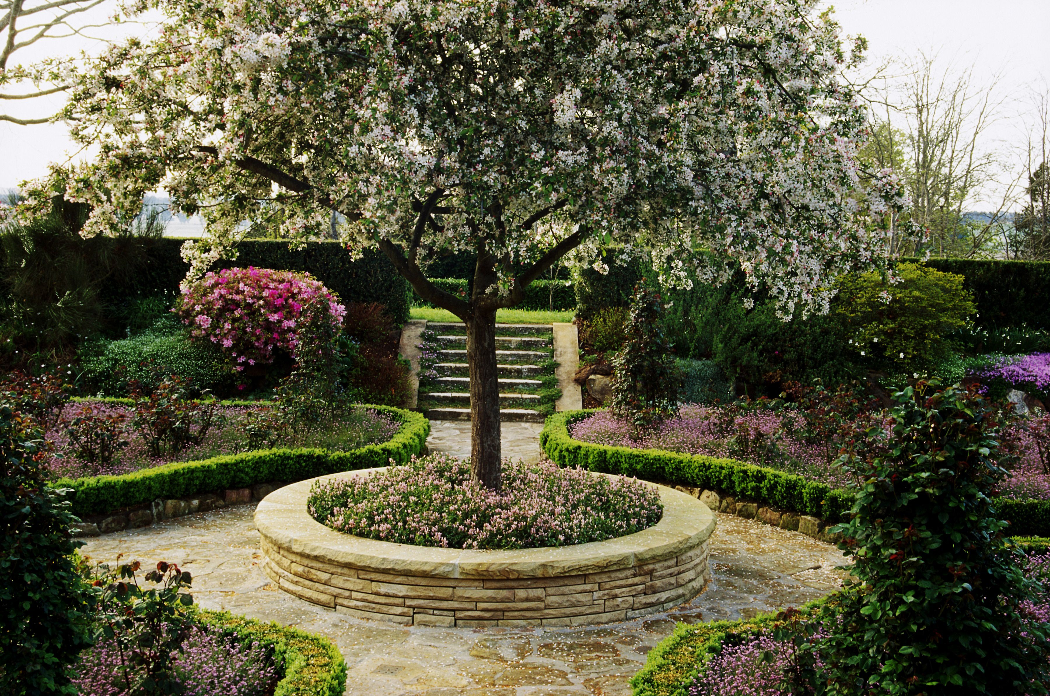 Trees for Patios and Small Space Gardens