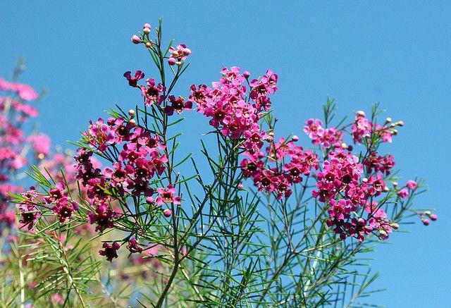 Mediterranean flowers mightylinksfo