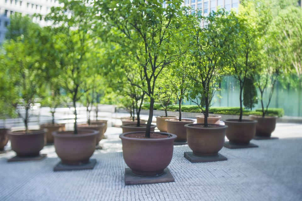 A set of growing potted trees