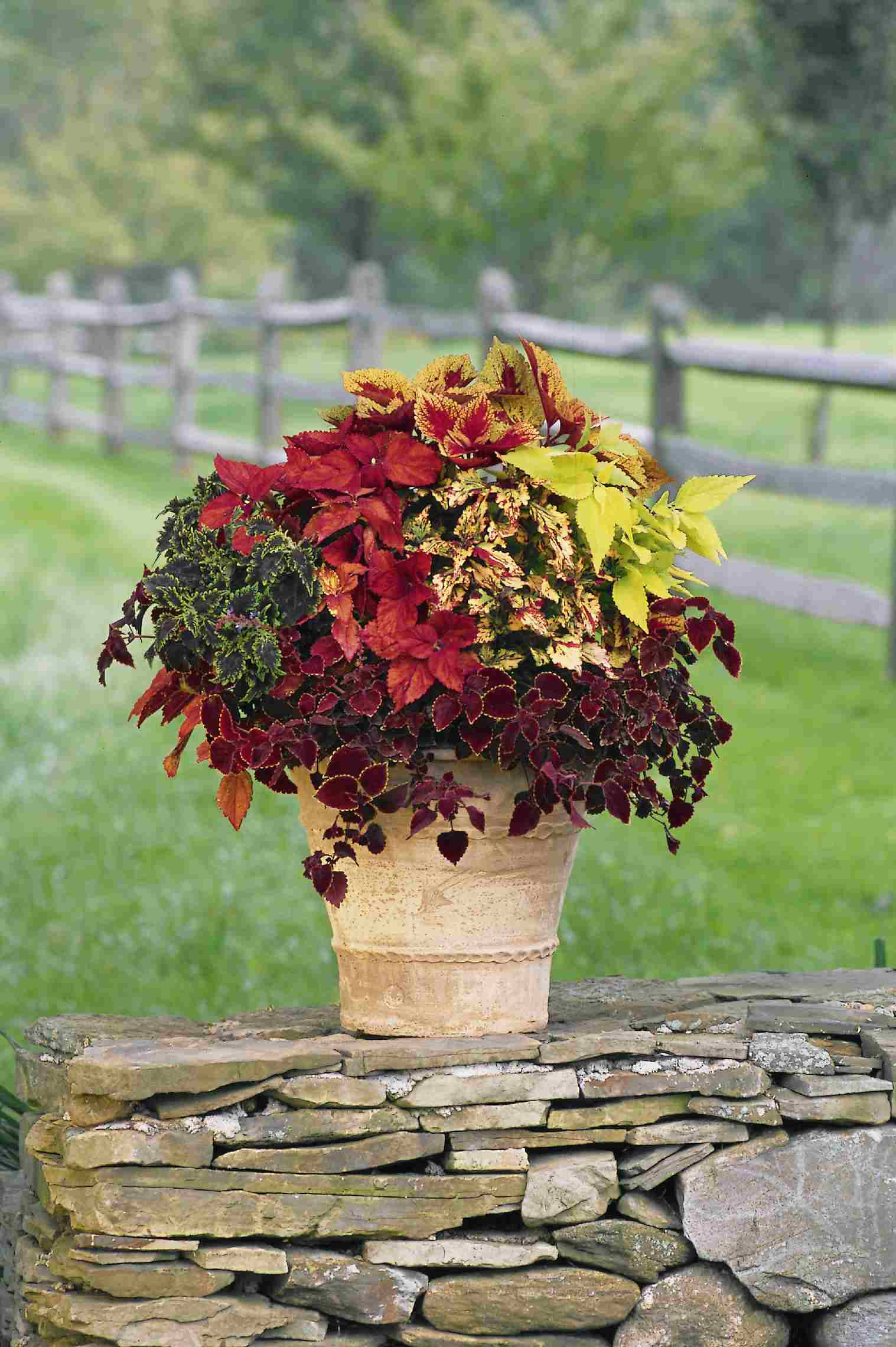 Pictures Of Great Container Gardens