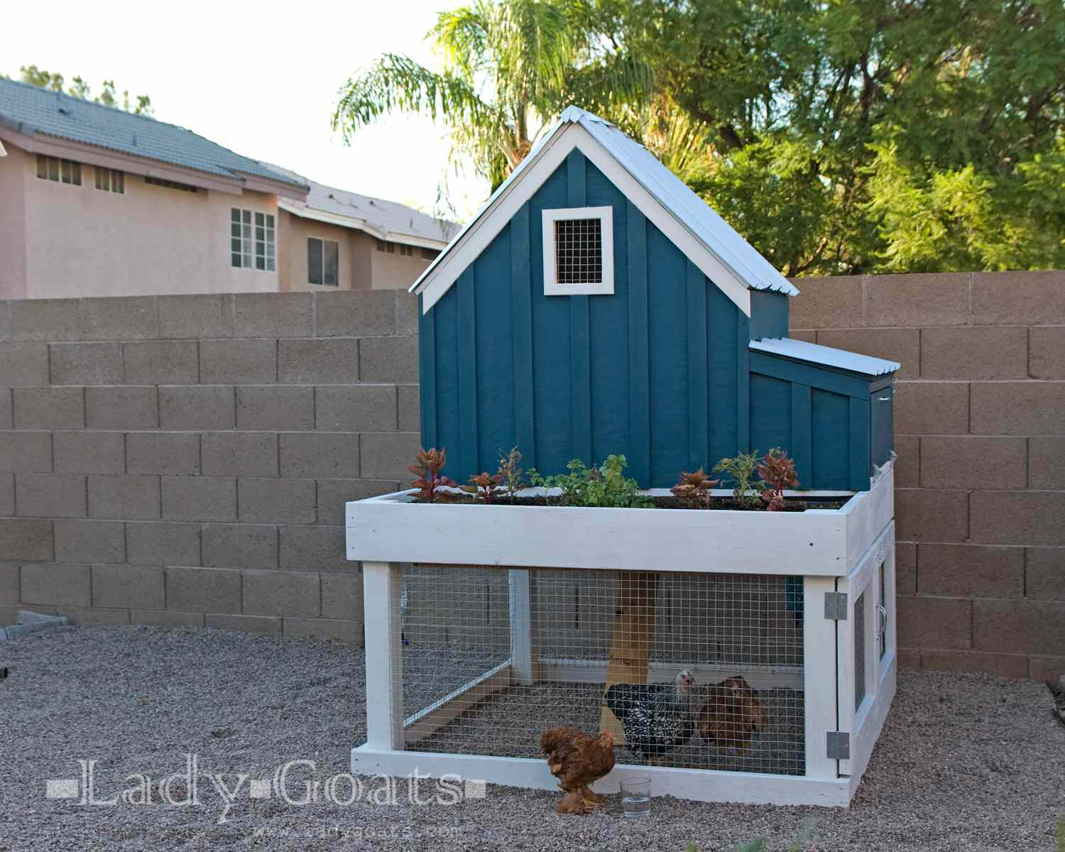 A photo of a blue and white chicken coop with room to roam - 13 Free Chicken Coop Plans You Can DIY This Weekend