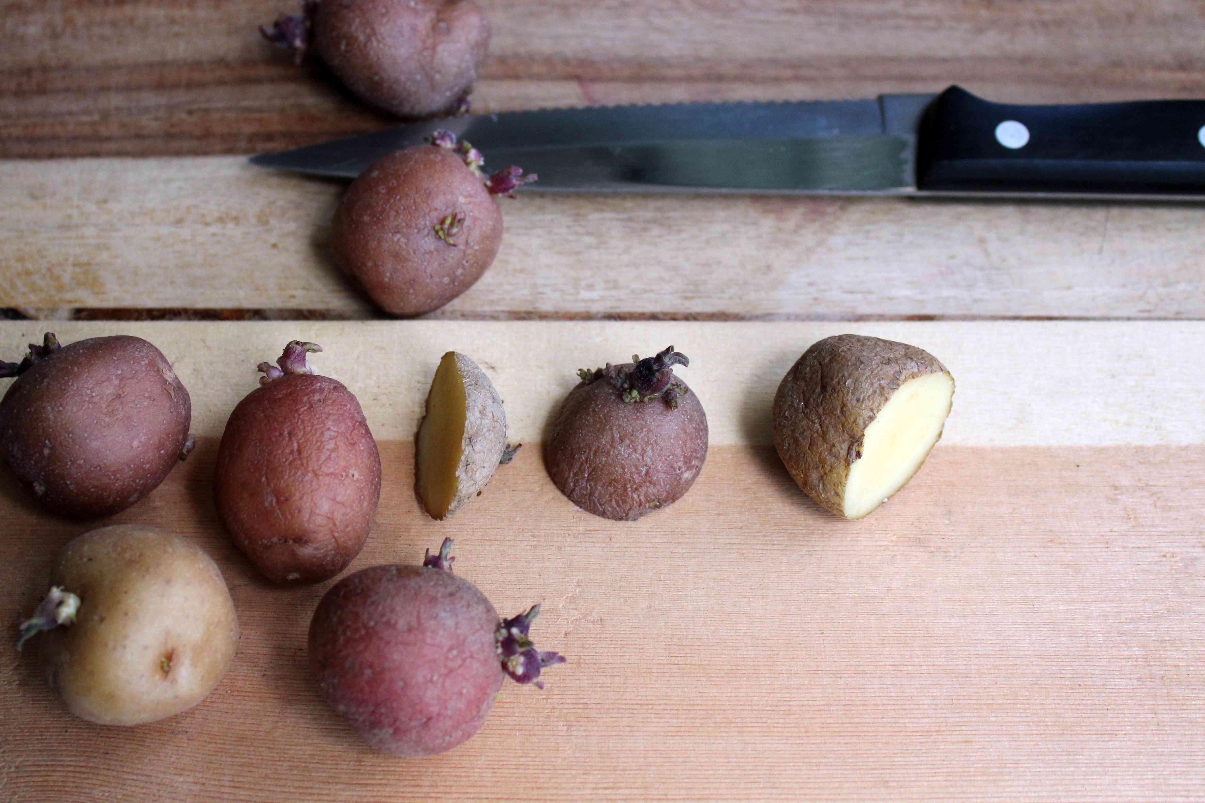 cutting seed potatoes in half