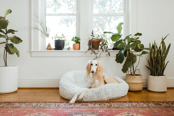 dog in dog bed in living room