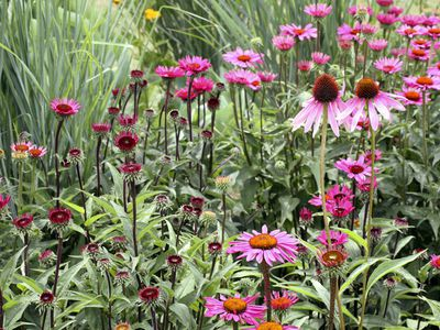 What is a perennial flower or plant what long blooming perennials should you have in your garden mightylinksfo