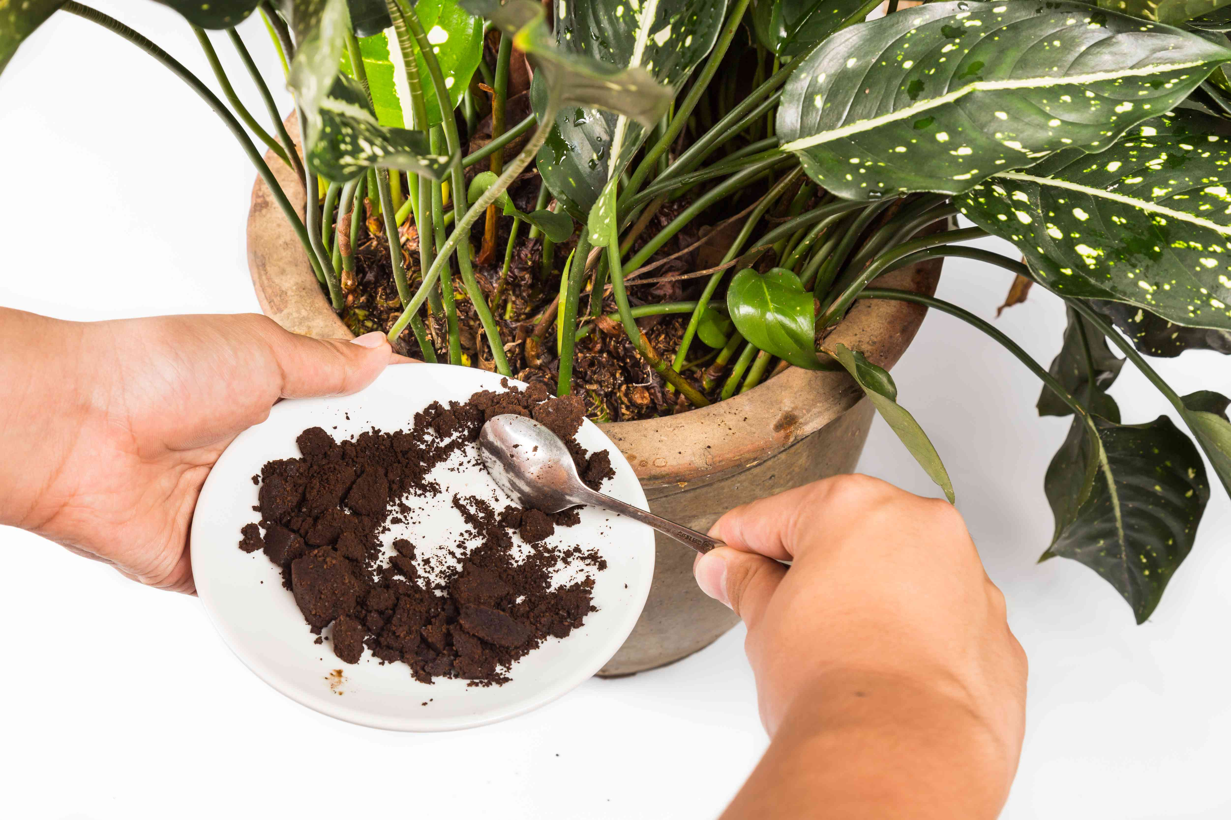 Male hands spooning coffee grounds into potted plant