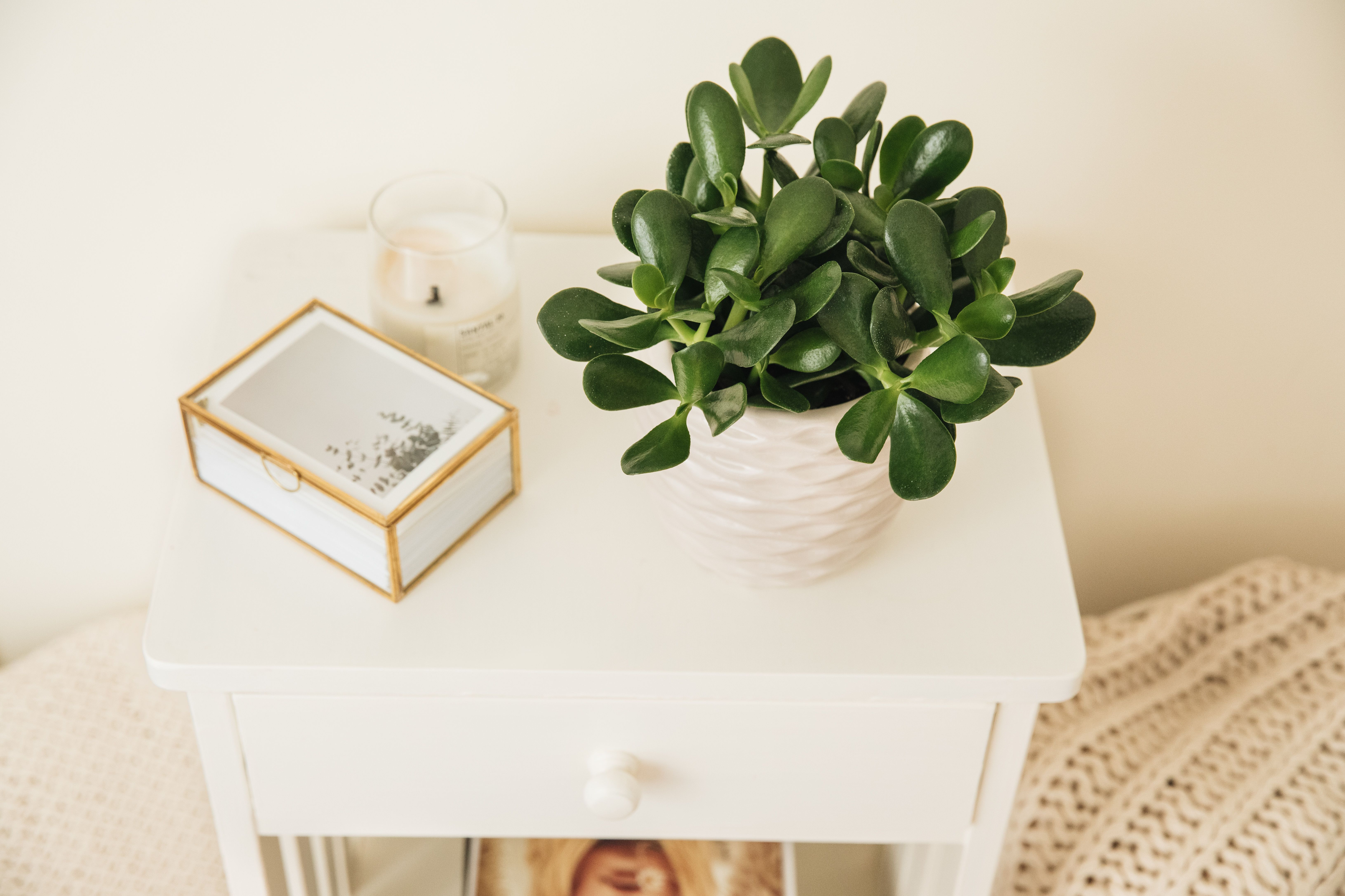 How To Grow And Care For Jade Plants