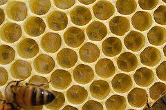 Honeybee eggs.