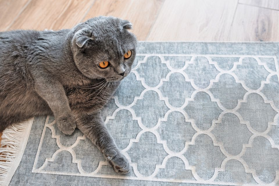 cat on a throw rug