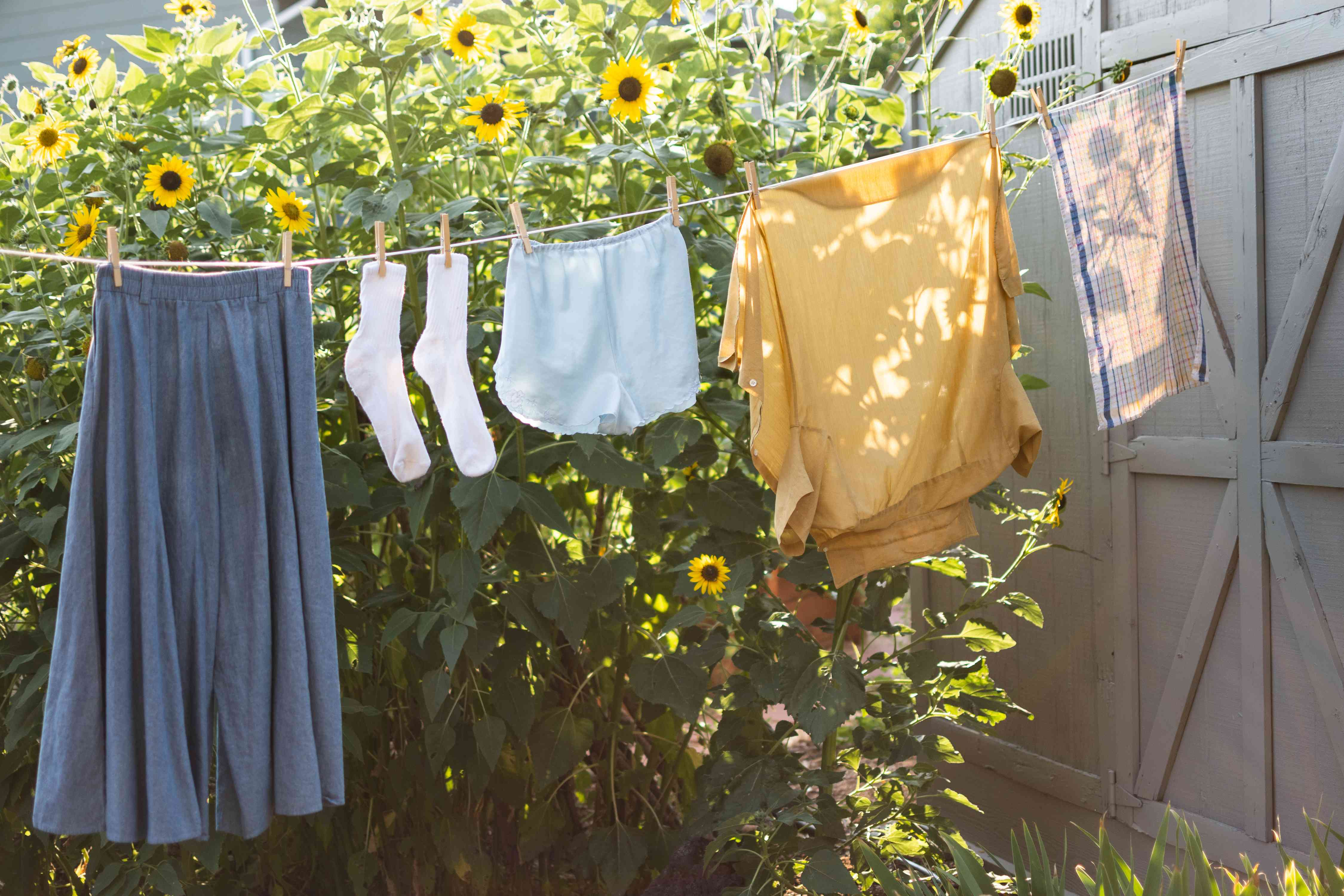 Clothes hanging outside on clothesline next to sunflowers giving off pollen