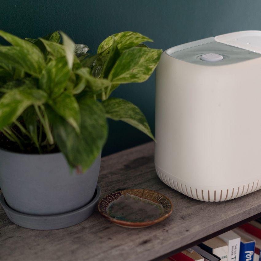 Canopy Humidifier