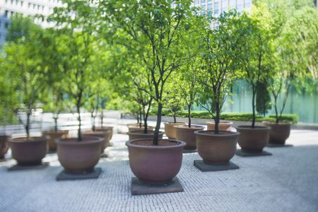 The Basics Of Growing Trees And Shrubs In Pots
