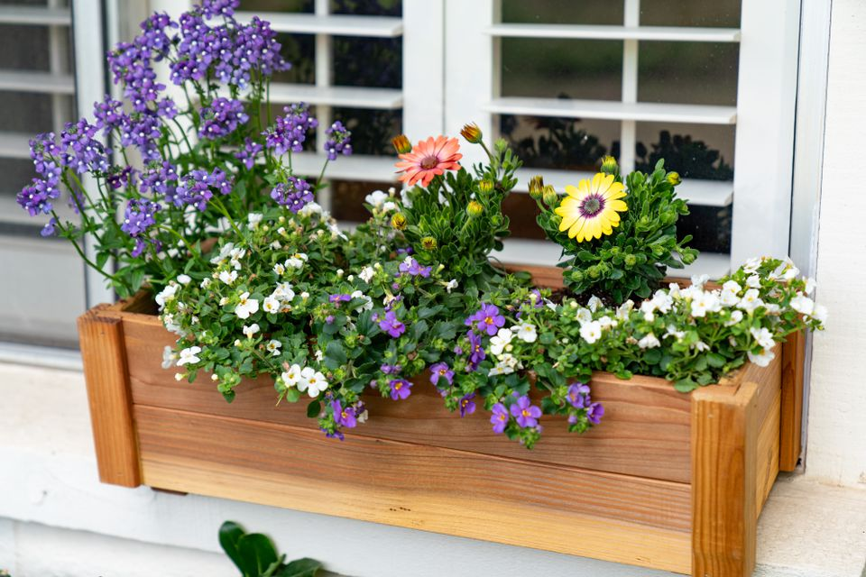 Spring window box with flowers and fillers