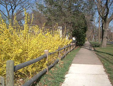 Example of border landscaping, showing picture of a post and rail fence.