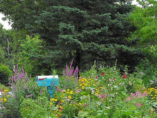 Mailbox Cottage Garden