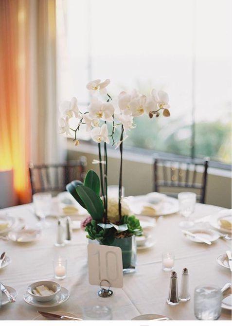Centro de mesa de boda de invierno de orquídeas en maceta